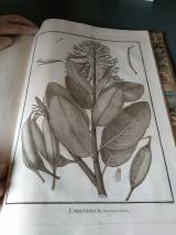 Flora peruviana2